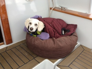 Lucy's underway-cool-weather position.  Ev--she loves the jacket, thanks.