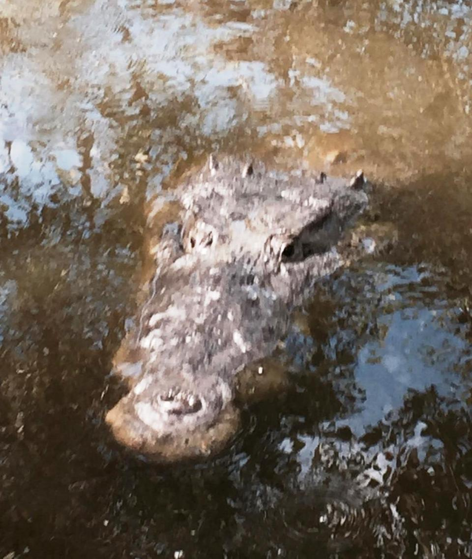 Jeffs croc