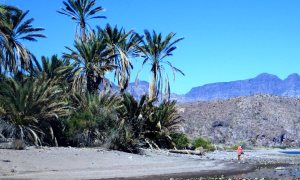 On a hike across the desert near Bahia Aqua Verde, we found this oasis.