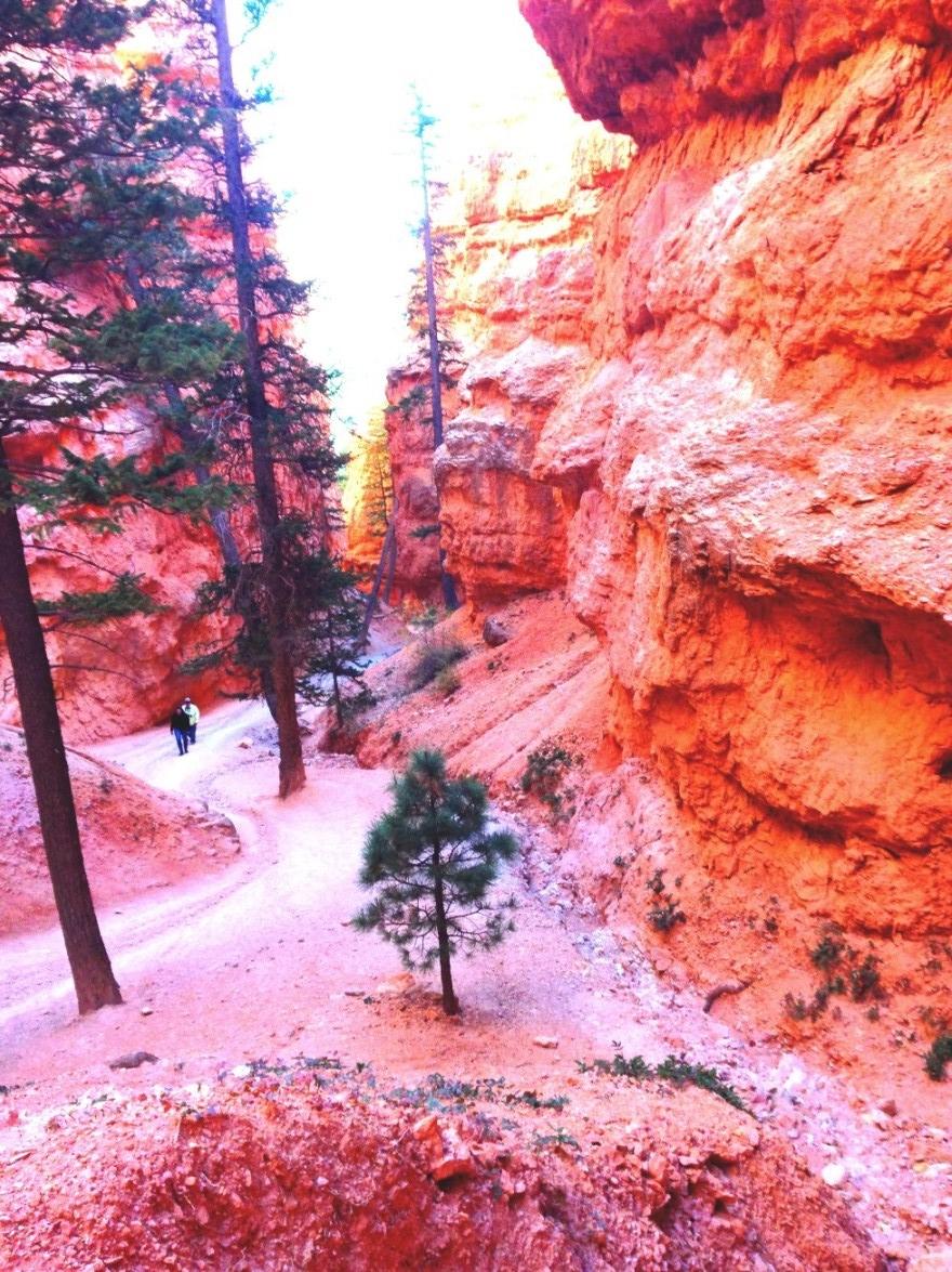 bryce-trail-2