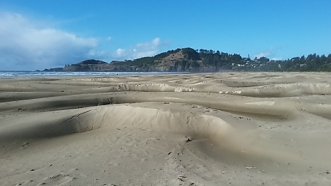 We spent a couple days at Newport to regroup after getting the boat put away and the van loaded for the trip to Mexico. This stretch of Agate beach used to be flat. Now it's riddled with waterways and dunes. Very interesting.