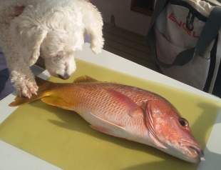 Lucy and Snapper (2)