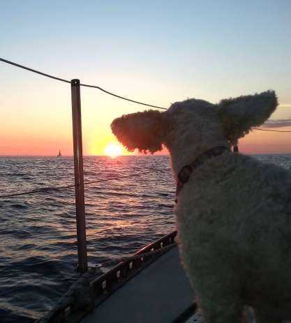 "Lucy fulling embracing the sunset while on passage--looking as always for the ""green flash""."