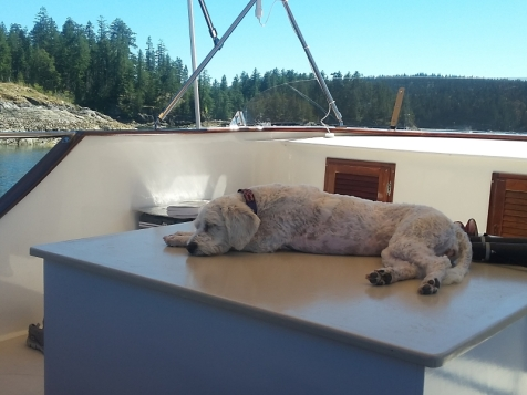 Lucy really liked the remodel of the flybridge.