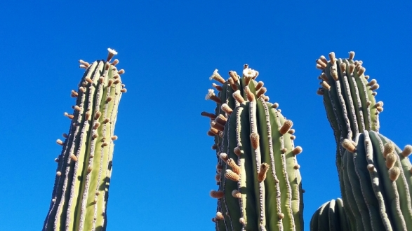 Many of the cactus were in bloom during our visit.