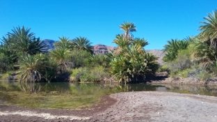 The hike across the super dry baja landscape north of Aguaverde is interrupted by this oasis. Strange to run across in all this desert.