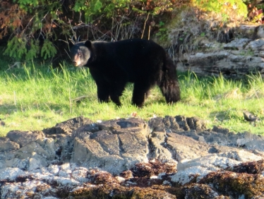 Lucy didn't want to go ashore here. Our first up close bear was near Bella Bella, early in the trip.